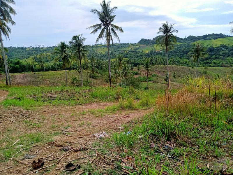 Picture of Agricultural Lot for sale in Tabogon