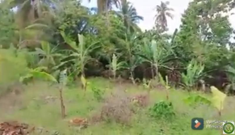 Picture of Agricultural Lot for sale in Clarin