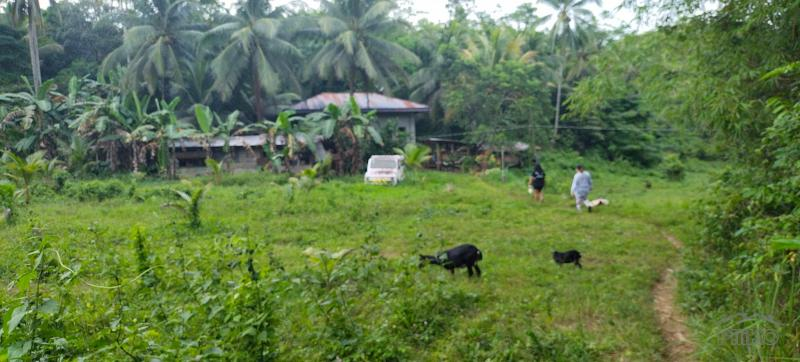 Picture of Agricultural Lot for sale in Sogod