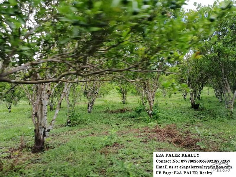 Picture of Agricultural Lot for sale in Goa