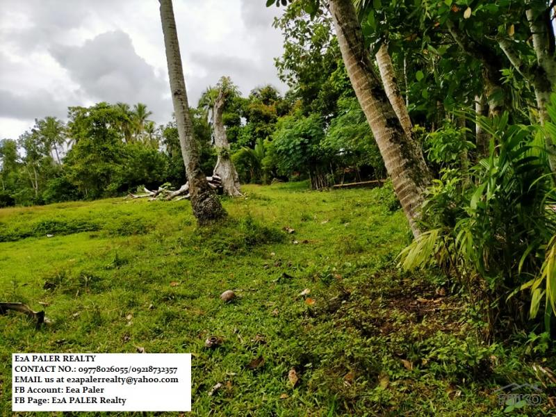 Picture of Agricultural Lot for sale in Daraga