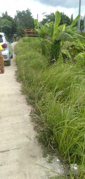 Picture of Land and Farm for sale in Tabogon