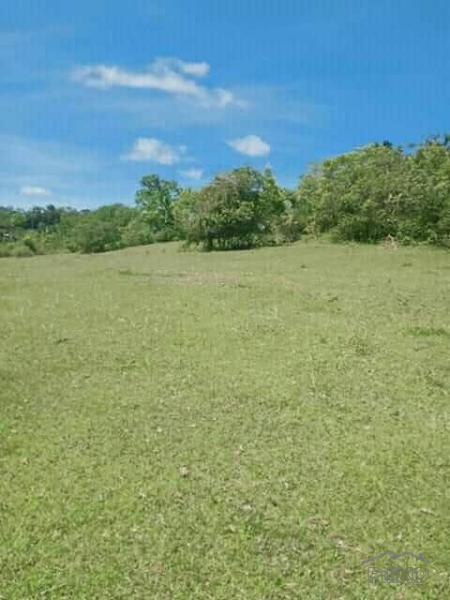Picture of Land and Farm for sale in Tubigon