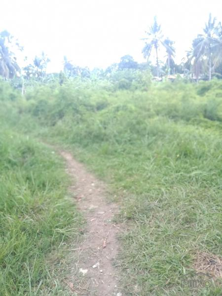 Picture of Land and Farm for sale in Liloan