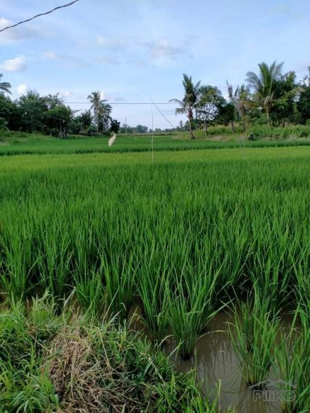 Picture of Agricultural Lot for sale in Ubay
