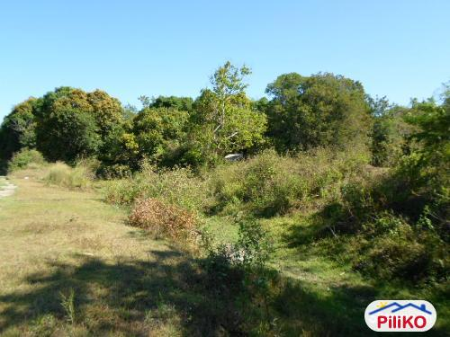 Picture of Agricultural Lot for sale in Botolan