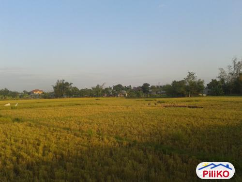 Picture of Agricultural Lot for sale in Concepcion