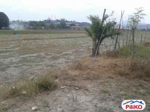 Picture of Agricultural Lot for sale in Cabangan