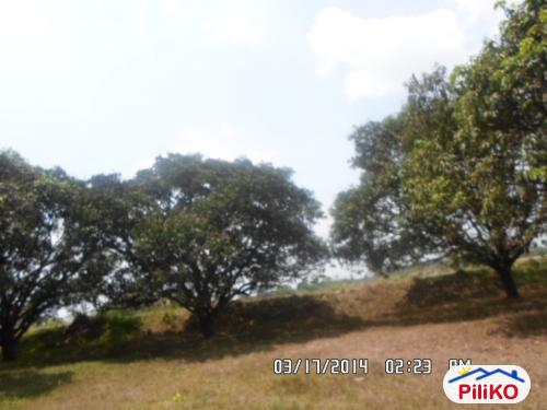 Picture of Agricultural Lot for sale in Capas