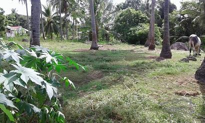 Picture of Agricultural Lot for sale in Dumaguete