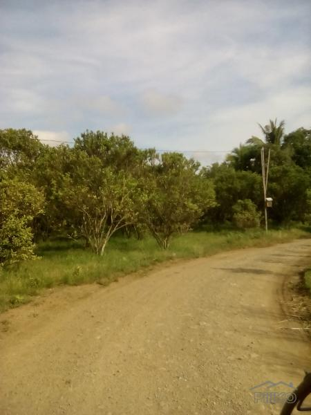 Picture of Land and Farm for sale in Rosario