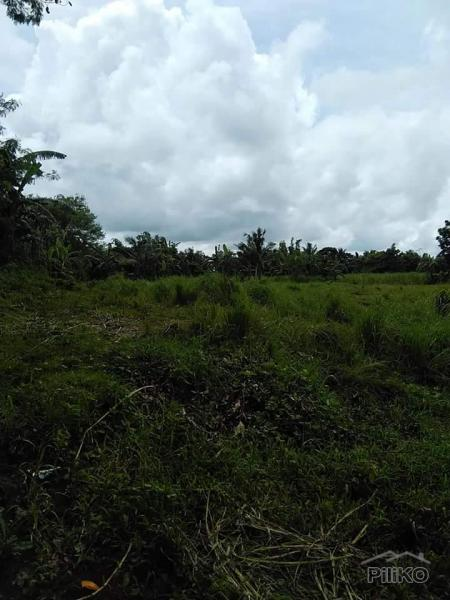 Picture of Land and Farm for sale in Tuy