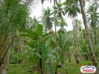 Other lots for sale in Island Garden City of Samal
