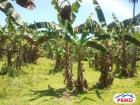 Agricultural Lot for sale in Gloria