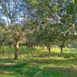 Agricultural Lot for sale in Trinidad