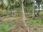 Residential Lot for sale in Guindulman