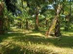 Agricultural Lot for sale in Ubay