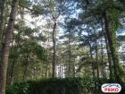 Hotel for sale in Baguio