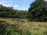 Agricultural Lot for sale in Dumaguete