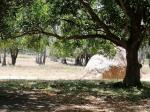 Land and Farm for sale in Rosario