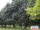 Agricultural Lot for sale in Quezon City