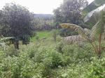 Land and Farm for sale in Mawab
