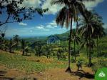 Land and Farm for sale in Carmen